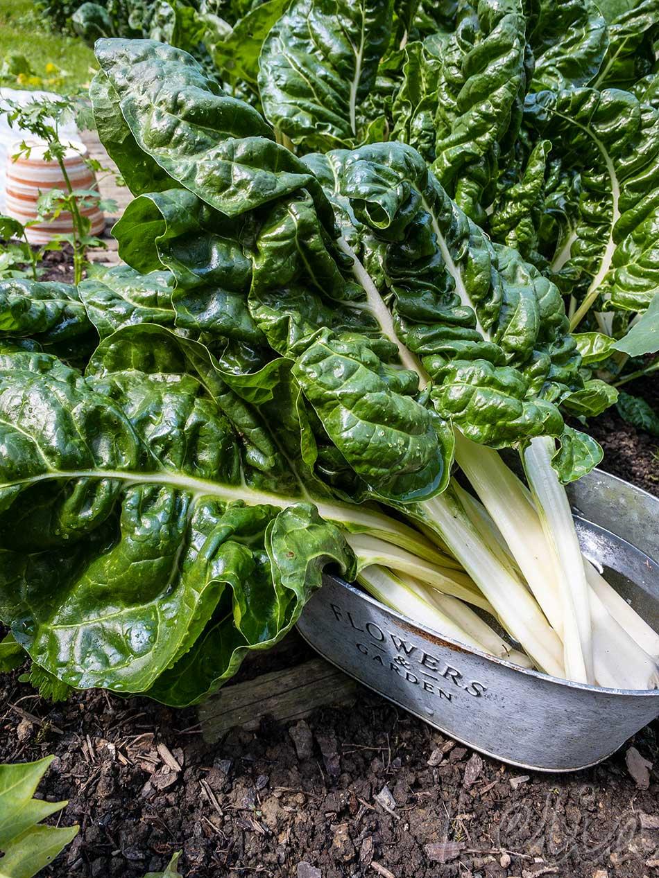 Gefülltes Gemüse 11 | Tatort Küche