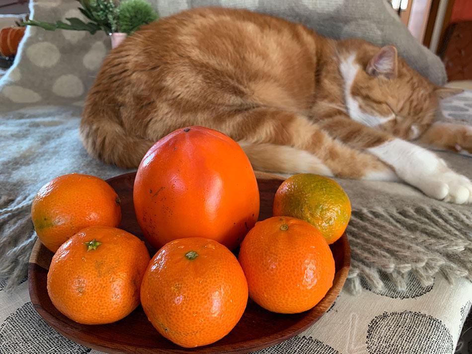 Mandarinenmarmelade1 | Tatort Küche