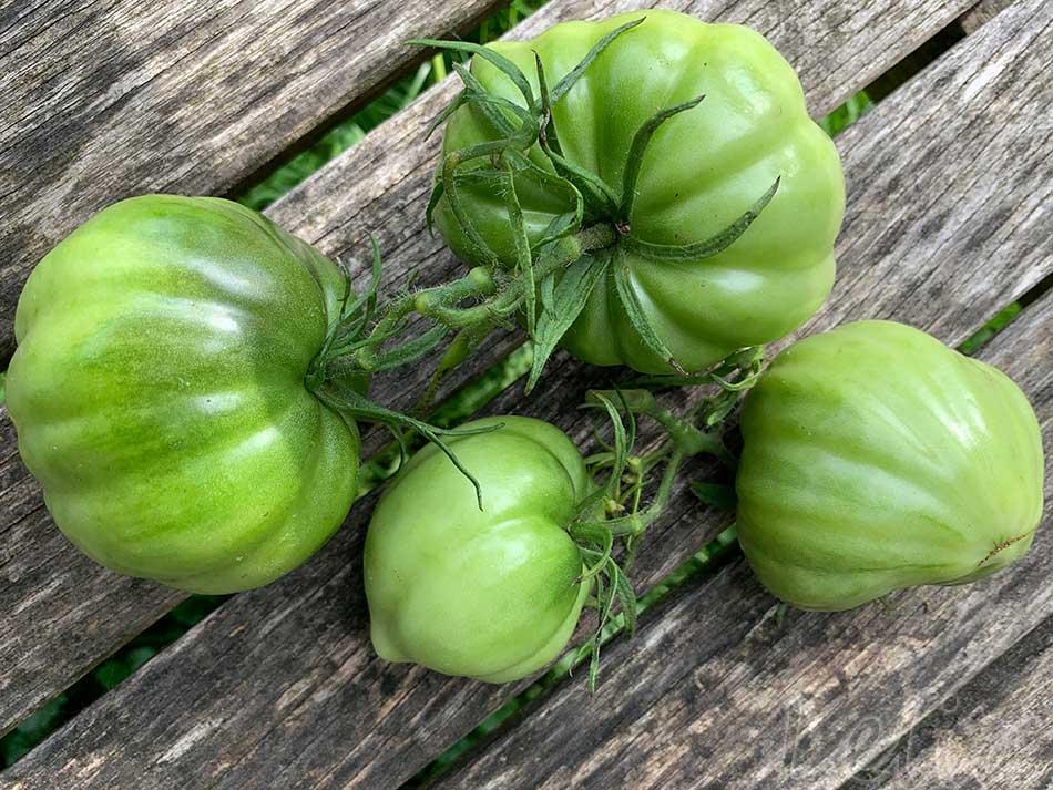 Gruene Tomaten 1 | Tatort Küche