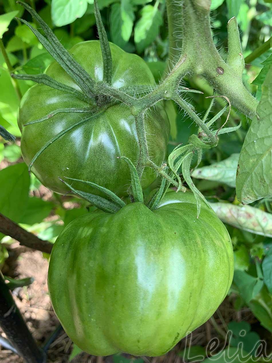 Gruene Tomaten 7 | Tatort Küche