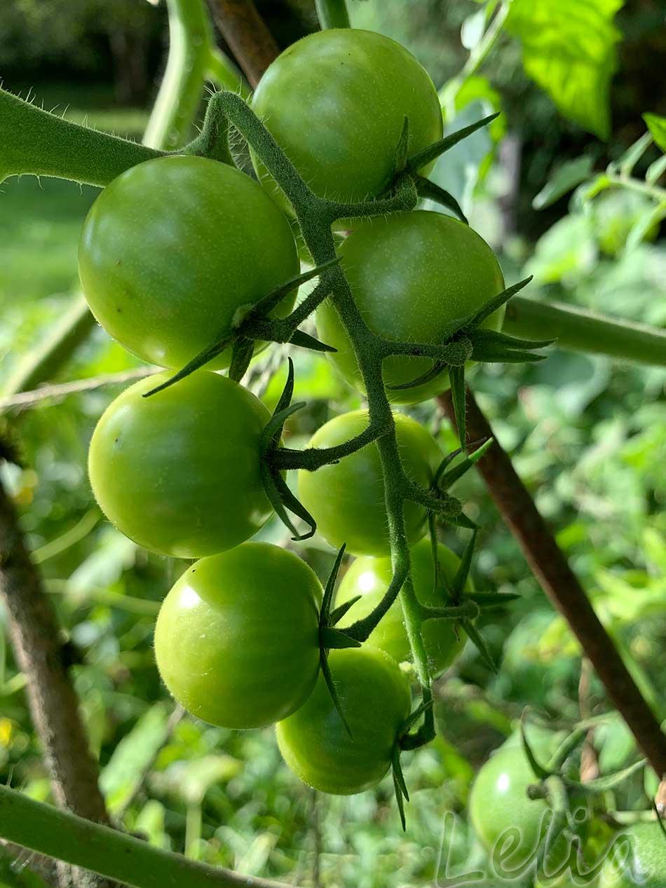 Gruene Tomaten 8 | Tatort Küche